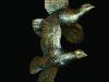 343-partridges-in-flight