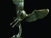 358-owl-swooping