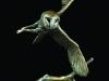 359-owl-flying