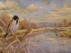 reed-buntings