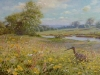 the-curlew-meadow