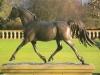 arab-horse-trotting