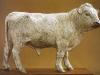 British White Bull