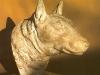 english-bull-terrier-head