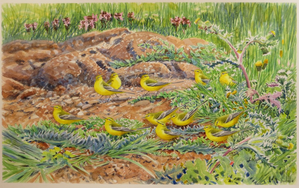 Yellow Wagtails - 33x54cm - £875